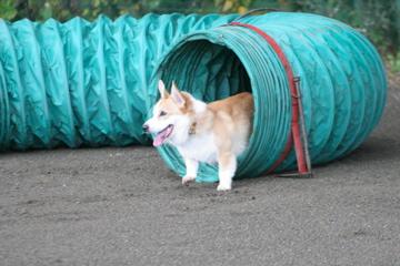 壱トンネル