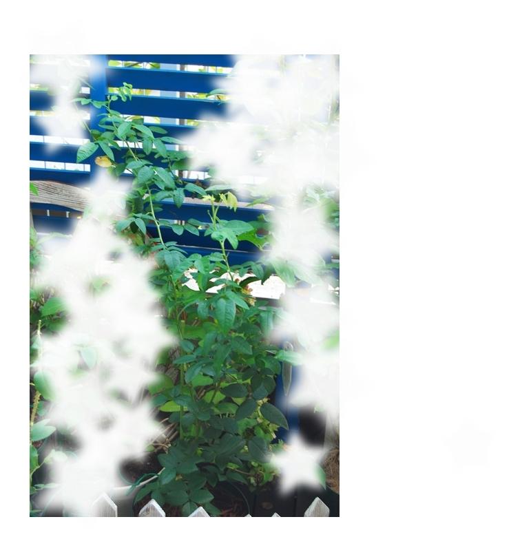 11_20110804180057.jpg