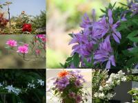 五月に咲いた花