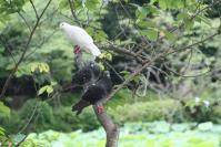 鳩の止まり木?