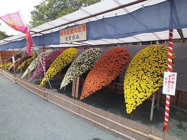 西日本菊花展(82771 byte)