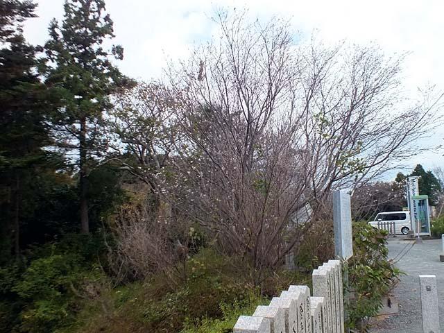 十月桜(じゅうがつざくら)(90452 byte)