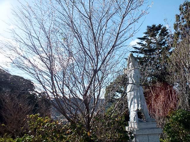 十月桜(じゅうがつざくら)(118340 byte)
