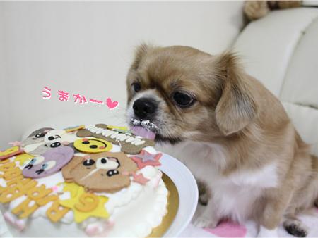 誕生日会6