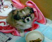 仔犬のhana 携帯 (3)