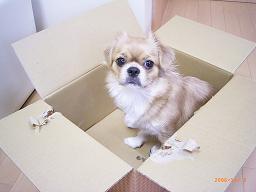 箱犬.JPG