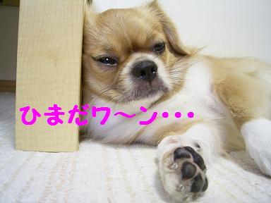 ひまだワ~ン・・・.JPG