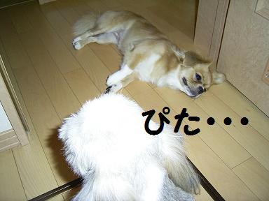 ぴた.JPG