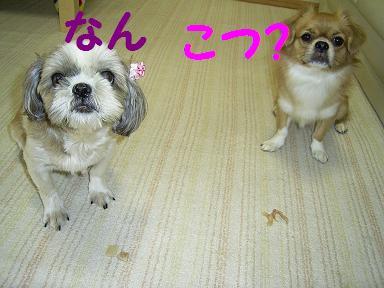 なんこつ?.JPG