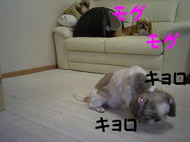 キョロキョロ.JPG