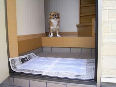玄関にトイレ~.JPG
