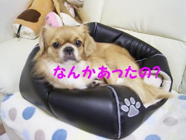 表紙ワンコおめでとう.JPG