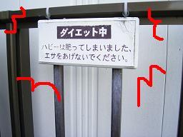 はびちゃん.JPG