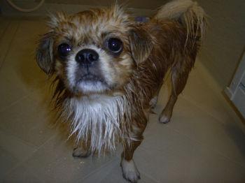 濡れ犬.jpg