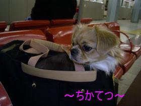 銀座へGO2.jpg