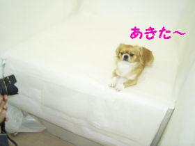 銀座へGO6.jpg