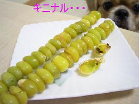 ぎんなん2.jpg