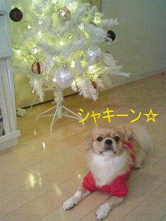 シャキーン☆.jpg