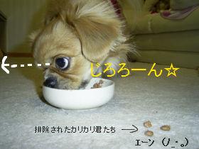 ごはんたいむ5.jpg