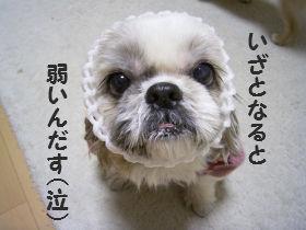 ごはんたいむ10.jpg