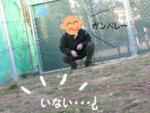ドッグラン104-2.jpg