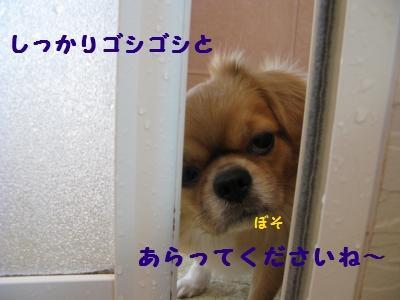 小姑3gifペイント.JPG