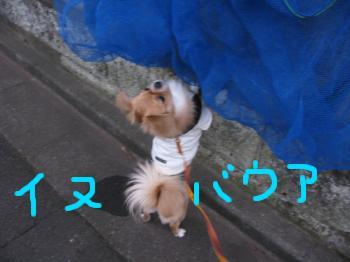 お散歩115-2.jpg