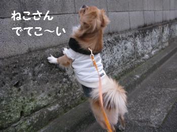 お散歩115-3.jpg