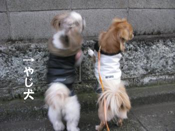 お散歩115-4.jpg