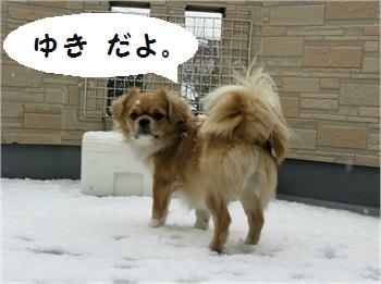 雪の日2008.1.23.jpg