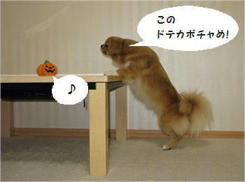 かぼちゃ3.jpg