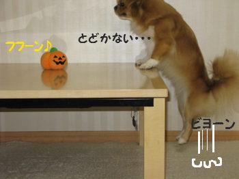 かぼちゃ5.jpg