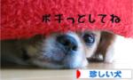 日本ブログ村「珍しい犬」へ.jpg