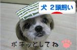 2頭飼いバナーまこちゃん.jpg