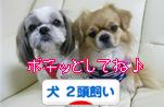 犬2頭飼いhanamaru.jpg