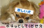 107ぽ.jpg