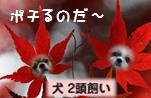 ぽちぽち.jpg