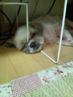 iphone_20110921163217.jpg