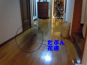 DSCN0469_convert_20100831135809.jpg