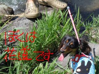 snap_hanamichi1001_201084144715.jpg