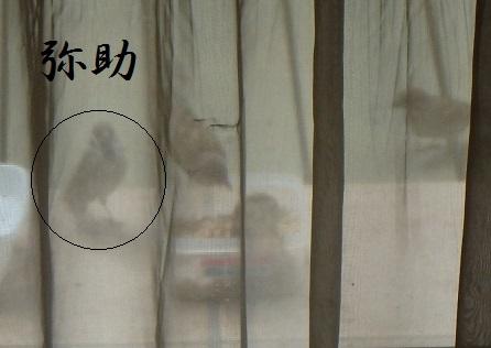 2014-10-04 002Yasuke