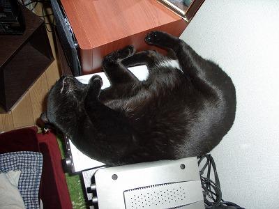 管理人、コンポの上で寝る