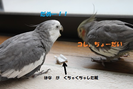 IMG_1165.jpg