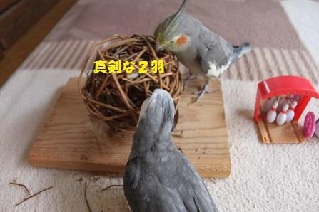 ものすごく真剣な2羽ですっ(笑