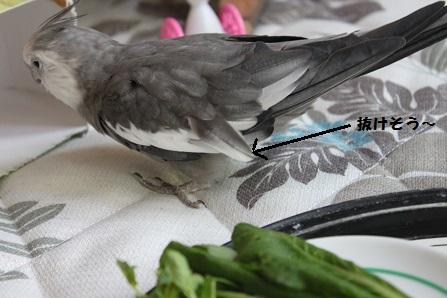 抜けそうな羽が・・