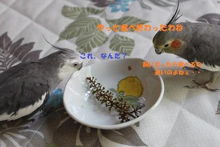 まってる人(鳥)が・・