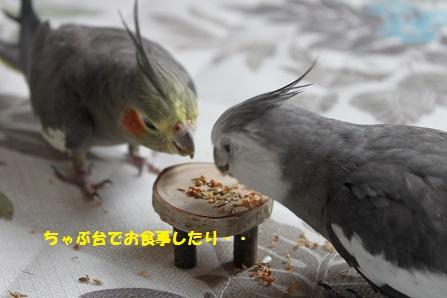 小動物用ペーパーレミックス