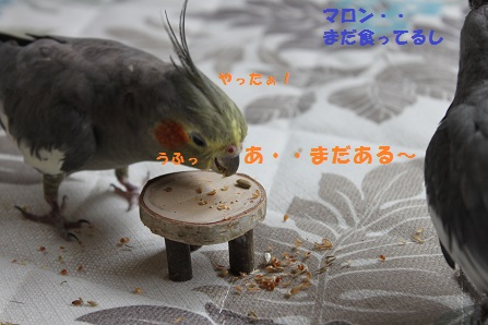 マロン、なんか食べてるし・・・