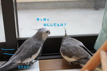 ぷぷっ(笑