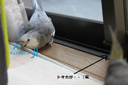 はいるよー!